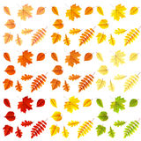 Set of colorful autumn leaves. EPS 10 Royalty Free Stock Images
