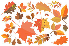 Set of colorful autumn leaves. With geometric texture and craquelure Stock Image
