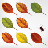 Set of colorful autumn leaves, hand-drawing. Vecto Stock Image