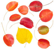 Set of colorful autumn leaves Stock Photos