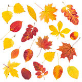 Set of colorful autumn leaves Stock Images