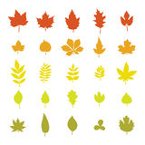 Set of colorful autumn leaves. Leaf collection  on white Royalty Free Stock Photo