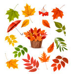 Set of colorful autumn leaves and objects. Stock Photography