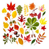 Set of colorful autumn leaves. Stock Image