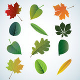 Set of colorful autumn leaves. Stock Photo