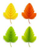 Set of Colorful Autumn Leaves Royalty Free Stock Photo