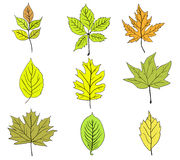 Set of colorful autumn leaves. Vector Royalty Free Stock Photo