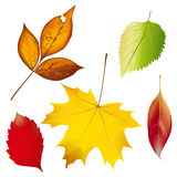 Set of colorful autumn leaves. Vector illustration Stock Photography