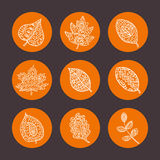 Set of colorful autumn leaves. Vector illustration. Stock Photo