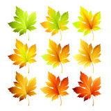 Set of colorful autumn leaves. Vector illustration Royalty Free Stock Photos