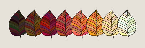 Set of colorful autumn leaves. Vector illustration. Stock Photos