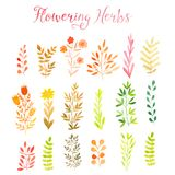 Set of colorful autumn leaves. Vector illustration.vector set of red autumn watercolor leaves and berries, hand drawn design eleme. Nts Stock Photos