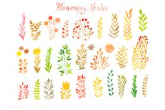 Set of colorful autumn leaves. Vector illustration.vector set of red autumn watercolor leaves and berries, hand drawn design eleme Royalty Free Stock Image