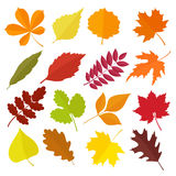 Set of colorful autumn leaves. Vector illustration. Stock Photography