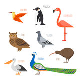 Set of Colorful bird icons. Owl, hummingbird and pigeon Stock Photo