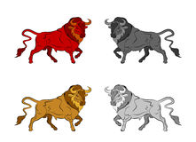 Set of colorful bulls. On a white background Stock Photo
