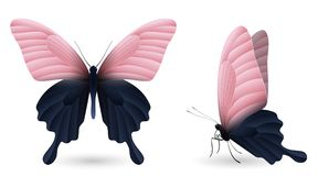 Set of colorful butterflies. Front and side view. Set of colorful realistic butterflies. Front and side view. Vector 3D illustration Royalty Free Stock Photos