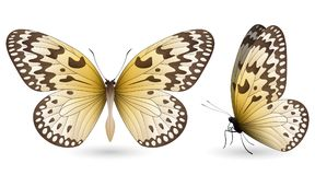 Set of colorful butterflies. Front and side view. Set of colorful realistic butterflies. Front and side view. Vector 3D illustration stock illustration