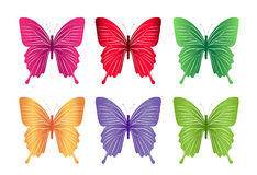 Set of Colorful Butterflies Isolated for Spring Stock Image