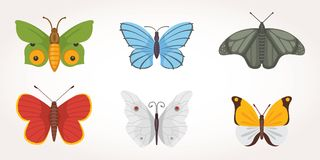 Set of colorful Butterfly Vector Design Illustration. summer insect Stock Photo