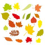 Set of colorful cartoon autumn leaves. Vector illustration. Royalty Free Stock Image