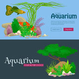 Set  colorful corals and algae, Vector underwater flora, fauna. Set of  colorful corals and algae on a white background. Vector underwater flora and fauna Stock Image