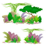 Set  colorful corals and algae, Vector underwater flora, fauna. Set of  colorful corals and algae on a white background. Vector underwater flora and fauna Royalty Free Stock Images