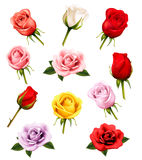 Set of colorful different roses. Royalty Free Stock Photos