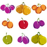 Set of colorful different vector ripe sweet fruits. Apricots, pl Royalty Free Stock Photos