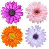 Set of colorful flower isolated on white Royalty Free Stock Photo