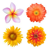 Set of colorful flowers Stock Photos