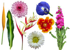 Set of colorful flowers Stock Image