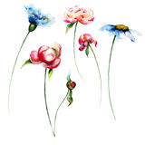 Set of colorful flowers Royalty Free Stock Photography