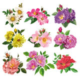 Set of colorful flowers of wild rose Stock Photos
