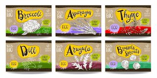 Set of hand drawn food labels, spices labels, fruit labels, vege Stock Photography