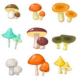 Set of colorful forest mushrooms Royalty Free Stock Photos