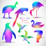 Set of Colorful Geometric Silhouettes Birds. Set of Colorful Geometric Silhouettes of Birds, Penguins, Hummingbirds Royalty Free Stock Images