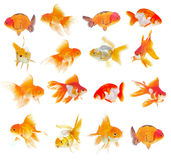 Set of Goldfish on White Background Stock Images