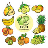 Set of colorful hand draw fruit Stock Image