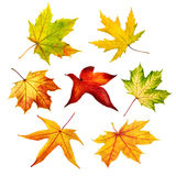Set of colorful isolated autumn leaves Stock Photos