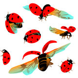 Set colorful Ladybugs on a transparent background Stock Images