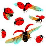 Set colorful Ladybugs on a transparent background Stock Images