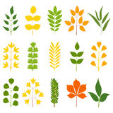 Set of colorful leaves,  illustration. Collection of colorful leaves,  illustration Royalty Free Stock Photo