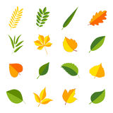 Set of colorful leaves,  illustration. Collection of colorful leaves,  illustration Royalty Free Stock Photos