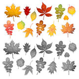 Set of colorful leaves vector Stock Photos