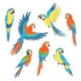 Set of macaw parrots royalty free illustration