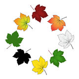 Set of colorful maple leaf . Vector illustration isolated on white background. Royalty Free Stock Photos