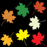 Set of colorful maple leaves Stock Image