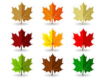 Set of colorful maple leaves Royalty Free Stock Photos