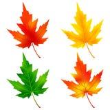 Set of colorful maple tree leaf Stock Photo